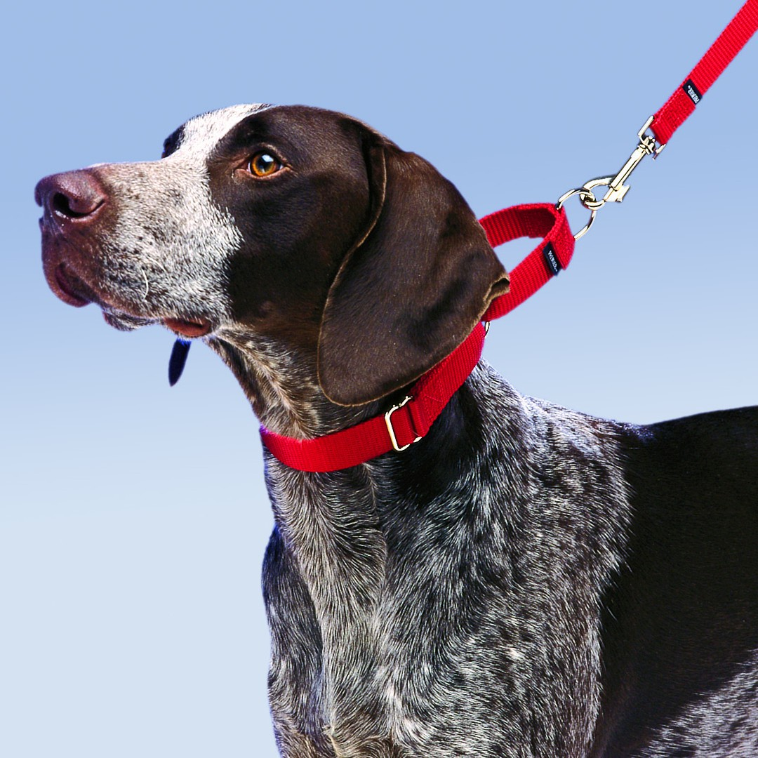 Shop For Martingale Collars With Quick Snap Buckle By