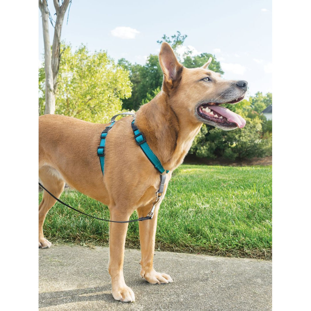 3in1 m teal_e3 3 in 1 harness by petsafe grp 3in1