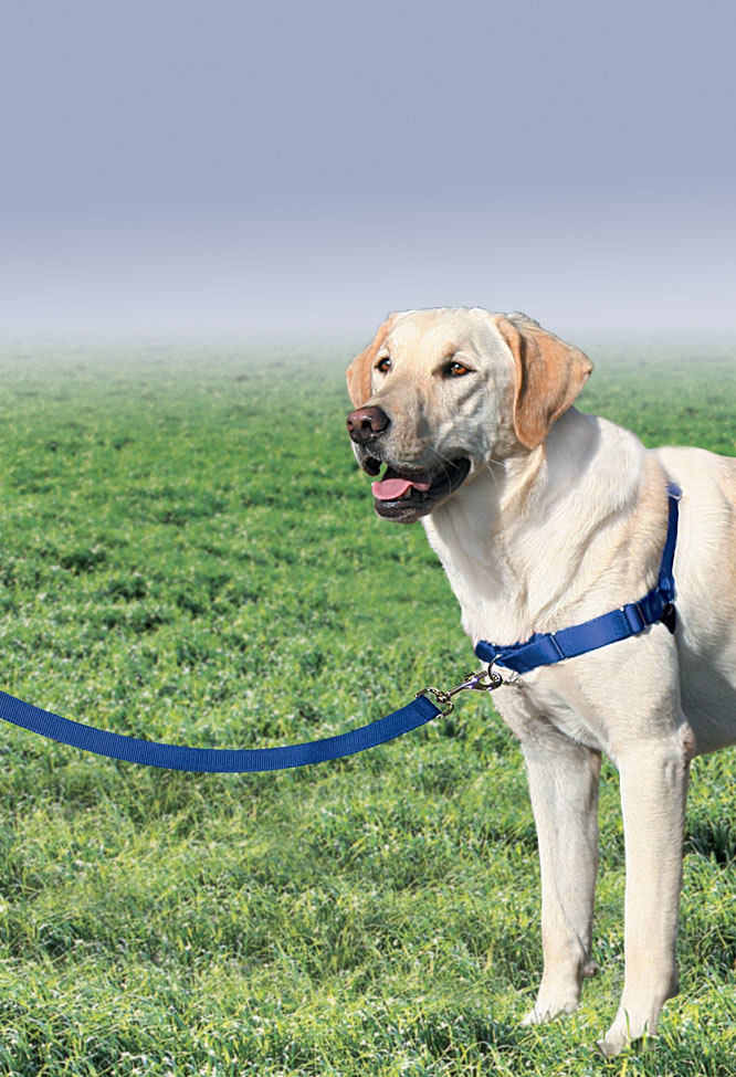 Sky Dog Training Collar