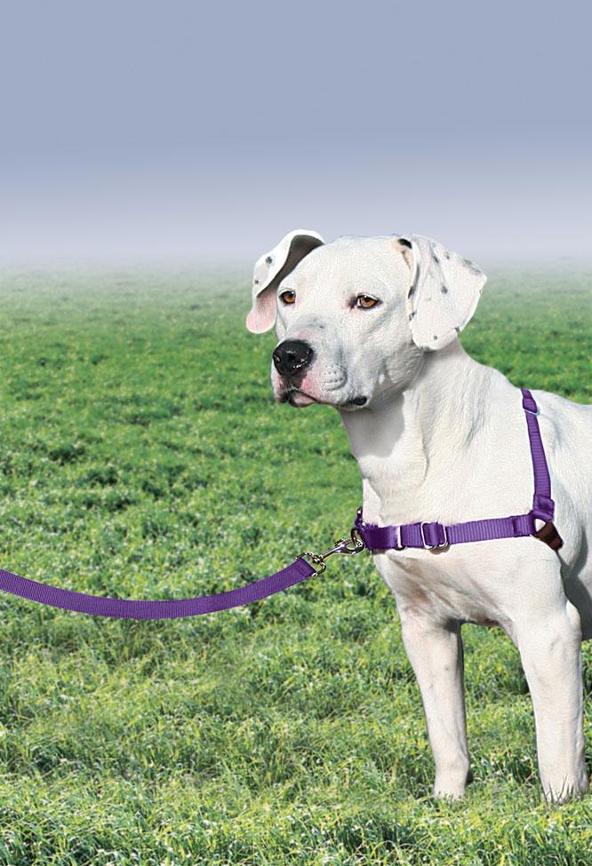 Dog Training Leader