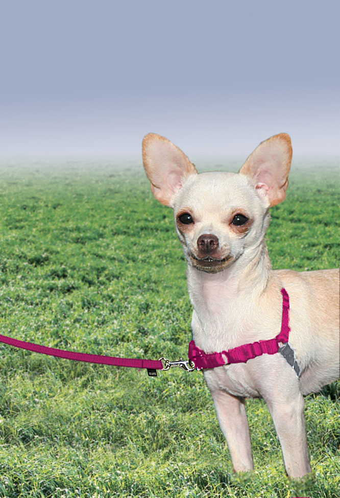 Small Dog Harness How To Put On