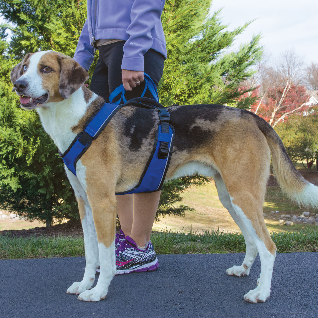 Easysport harness by petsafe grp esph pooptronica Images