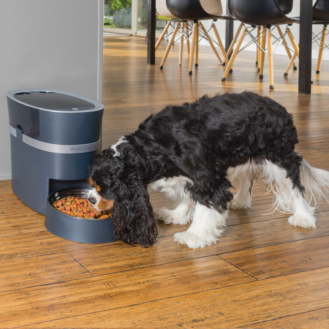 market plan automatic dog feeder To look after staying home alone or overweight pets automatic pet feeder lusmo.