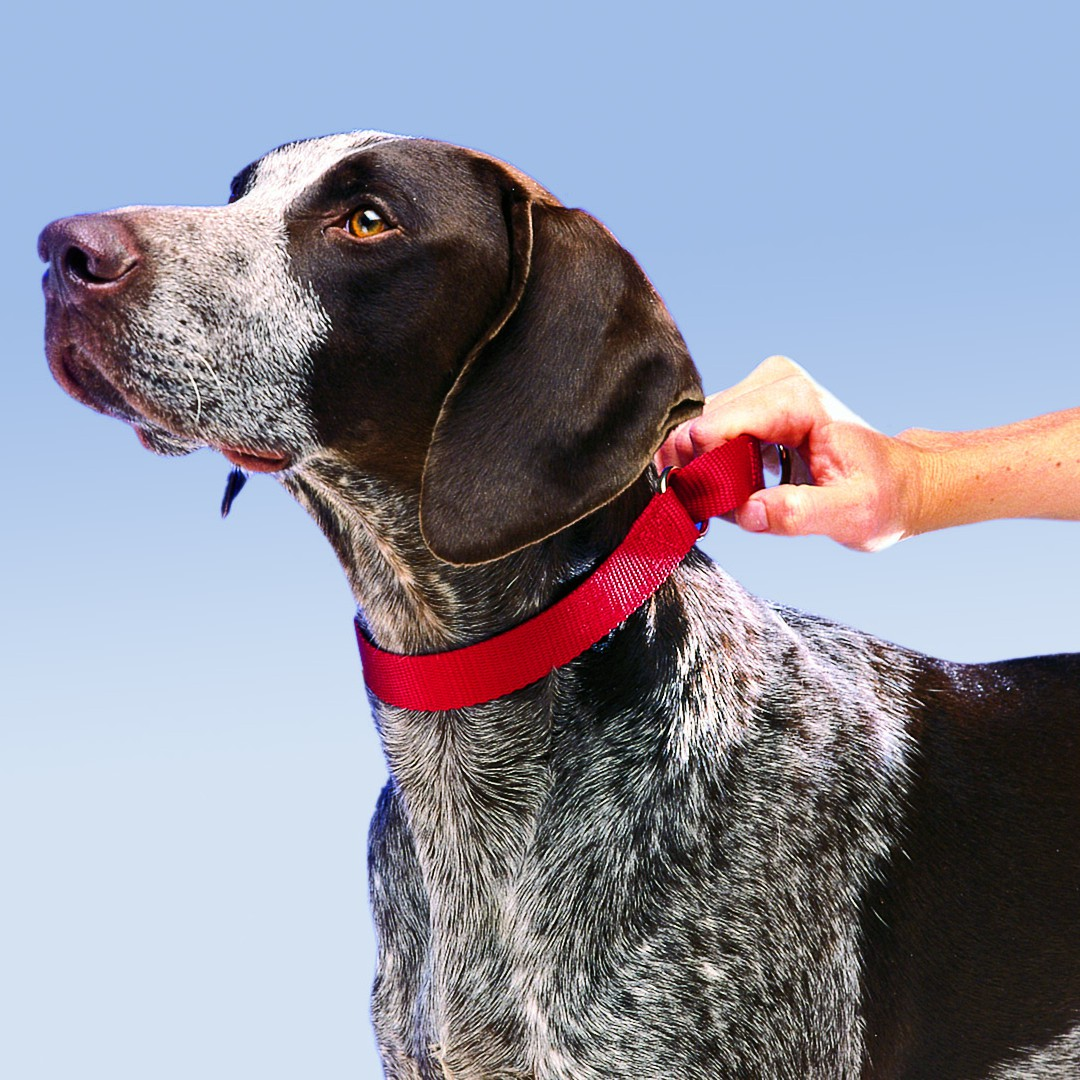 Martingale Collars By Petsafe Grp Prc